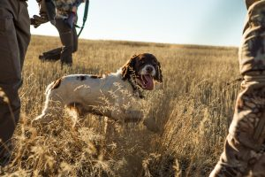 Chien-chasse-champ
